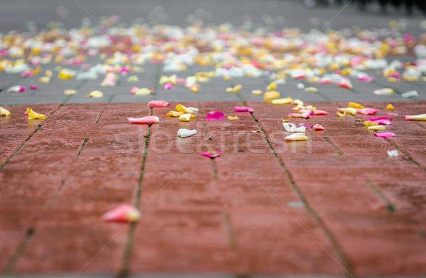 асфальт Свадебная церемония свадьба красоту белый Сток-фото © amok