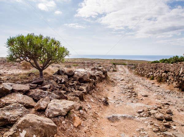 Resmedilmeye değer manzara tenerife İspanya gökyüzü Stok fotoğraf © amok