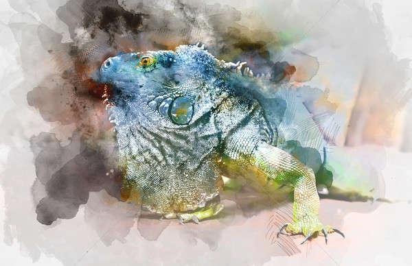 Groene leguaan digitale aquarel schilderij Stockfoto © amok