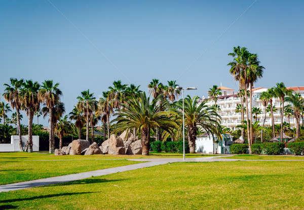 Palm trees in the Costa Adeje resort Stock photo © amok