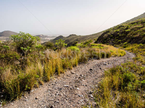 Rocky landscape of Tenerife. Canary Islands. Spain Stock photo © amok