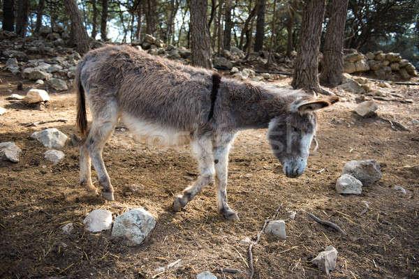 Donkey outdoors Stock photo © amok
