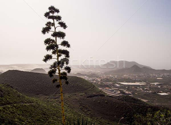 Belo paisagem tenerife canárias Espanha viajar Foto stock © amok