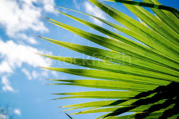 Tropicali vacanze viaggio spiaggia natura foglia Foto d'archivio © amok
