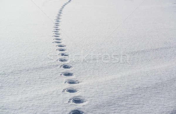 Tracks in snow Stock photo © amok
