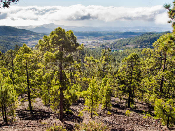 Beautiful landscape with trees and clouds. Teide National Park  Stock photo © amok