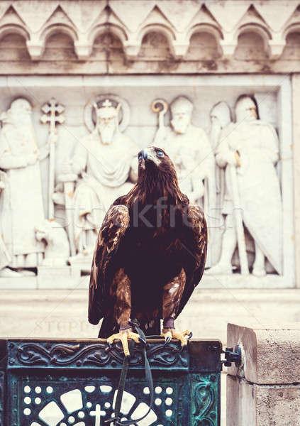 Eagle Stock photo © amok