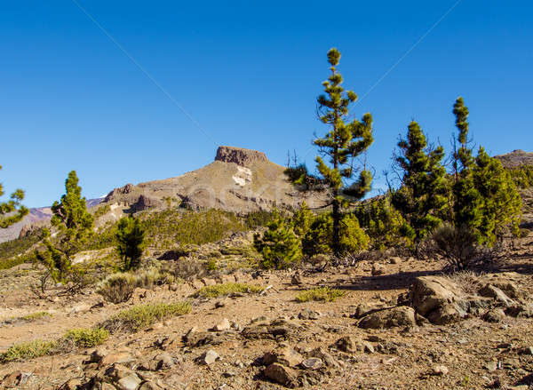 Teide National Park, Tenerife. Canary islands, Spain Stock photo © amok