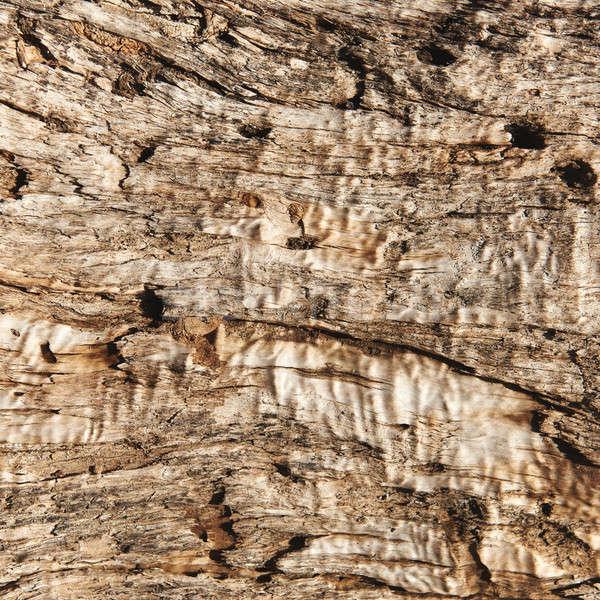 Primer plano madera vieja textura árbol diseno wallpaper Foto stock © amok