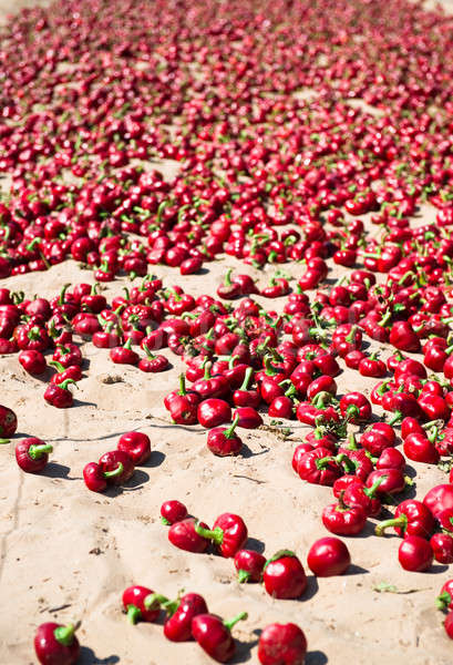 Red pepper outdoors Stock photo © amok
