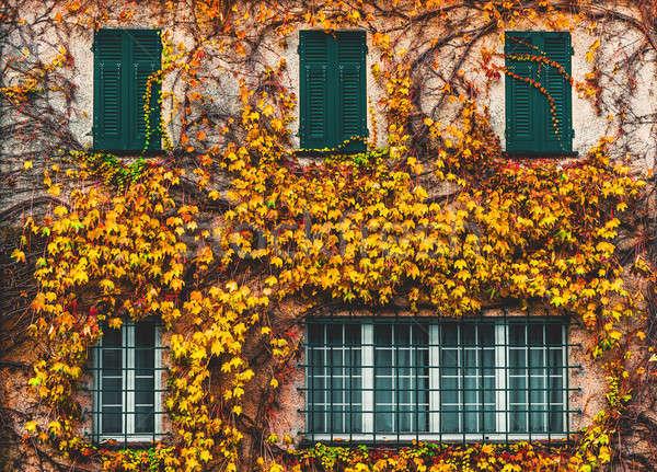 古い建物 ツタ 緑 窓 壁 ホーム ストックフォト © amok