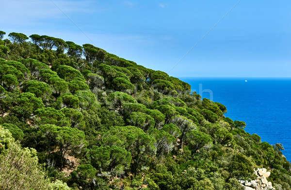 Hill of Cala Salionc, Tossa de Mar. Costa Brava, Spain Stock photo © amok