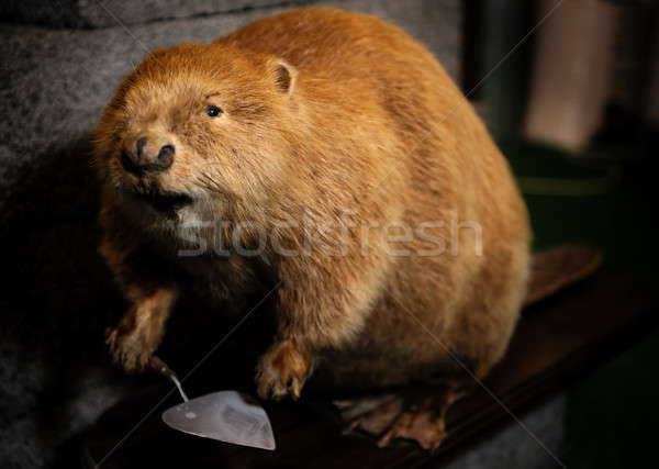 Stuffed beaver with construction spatula close-up Stock photo © amok