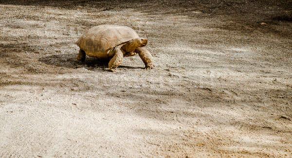亀 屋外 マラガ スペイン 砂 皮膚 ストックフォト © amok