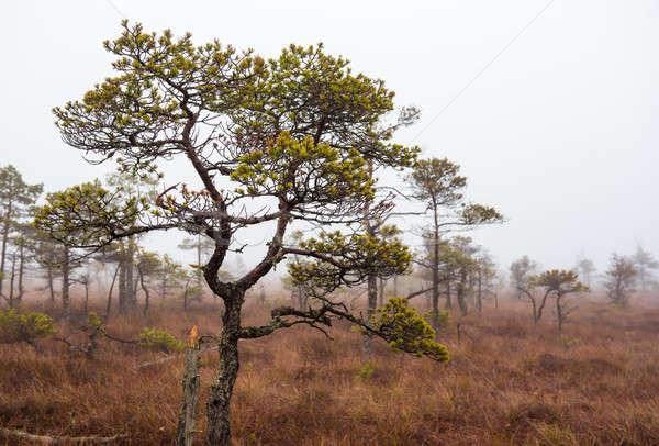 Ochtend park Letland hemel gras landschap Stockfoto © amok