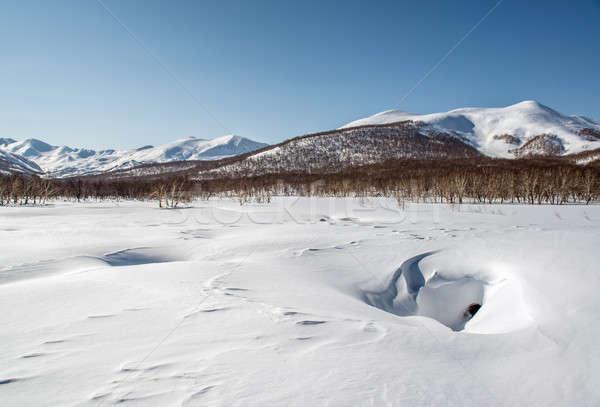 Natuur park thermisch bad vallei Rusland bos Stockfoto © amok