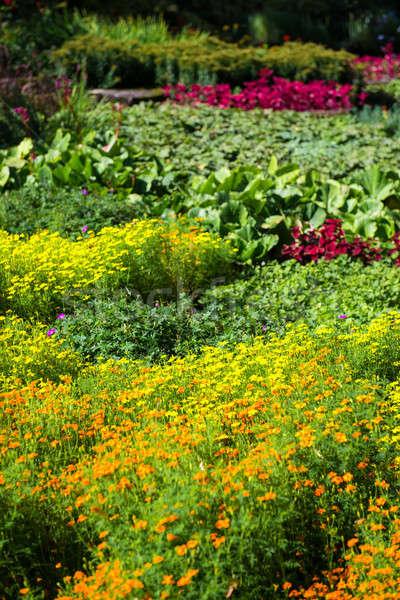 Güzel çiçekler fotoğraf Riga Letonya çim Stok fotoğraf © amok