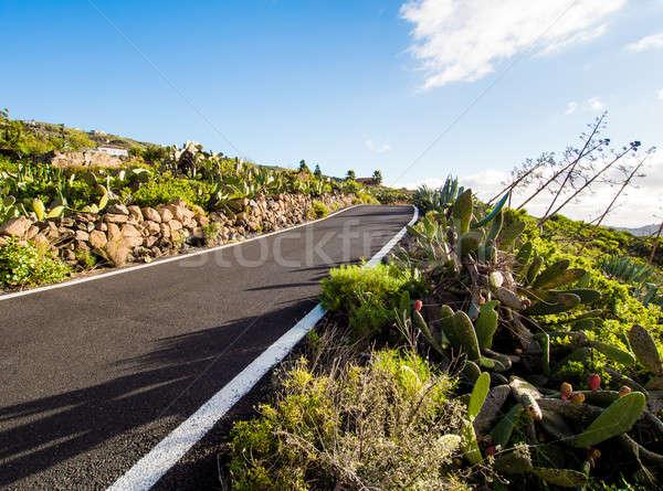 Road to Volcano Teide at Tenerife, Canary Islands. Spain Stock photo © amok