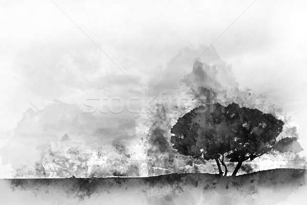 Silhouette of a tree. Digital watercolor monochrome painting  Stock photo © amok