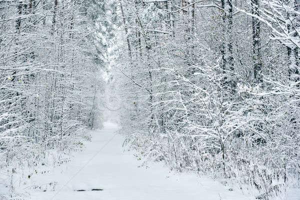 Bos Letland noordelijk Europa weg natuur Stockfoto © amok