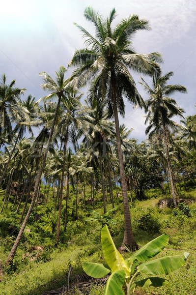 Foto stock: Selva · isla · Tailandia · cielo · sol · naturaleza