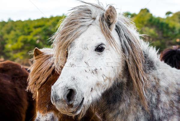 ポニー 屋外 自然 馬 白 動物 ストックフォト © amok