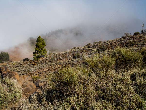 Northern slope of volcano Teide. Tenerife, Canary Islands. Spain Stock photo © amok