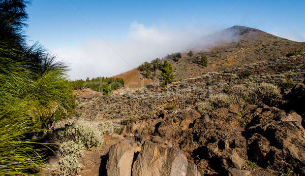 Northern slope of volcano Teide. Tenerife, Canary Islands. Spain Stock photo © amok