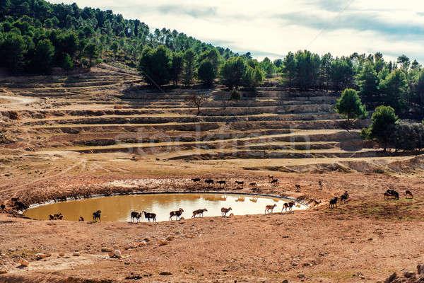 Animales caminando alrededor safari parque España Foto stock © amok