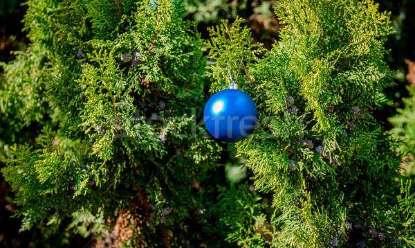 синий мяча подвесной соснового веточка фон Сток-фото © amok