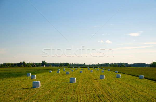 Hay bales Stock photo © amok