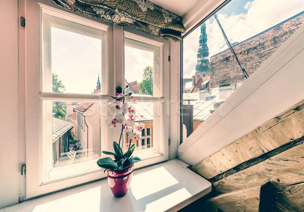White orchids in pot on sunny window sill Stock photo © amok
