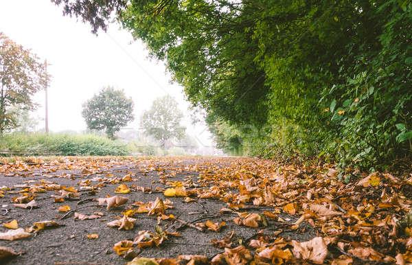 Asfalto luce strada alberi verde Foto d'archivio © amok