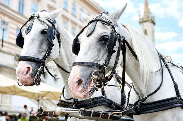 Horse-drawn carriage in Vienna, Austria Stock photo © amok