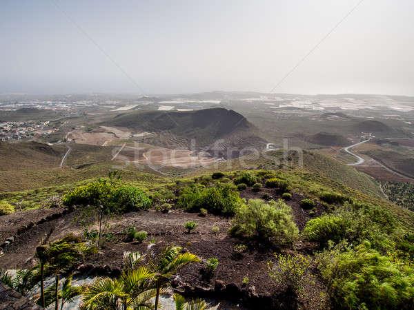 先頭 表示 テネリフェ島 カナリア諸島 スペイン ツリー ストックフォト © amok