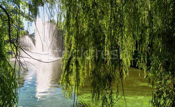噴水 リガ 運河 公園 ツリー ストックフォト © amok