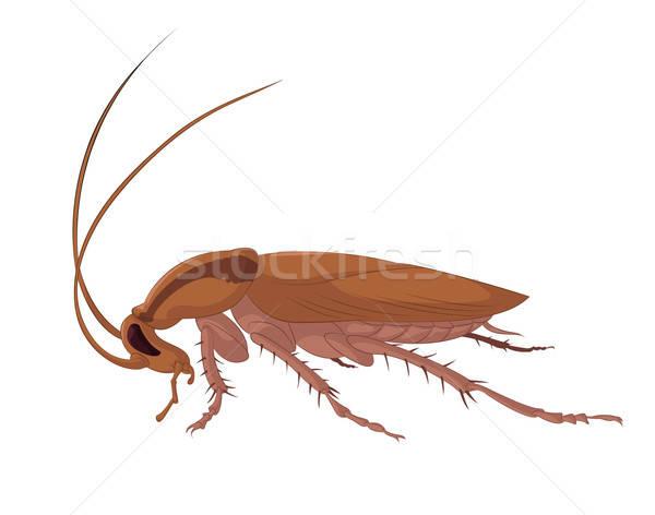Hamamböceği vektör görüntü büyük kötü kahverengi Stok fotoğraf © Amplion