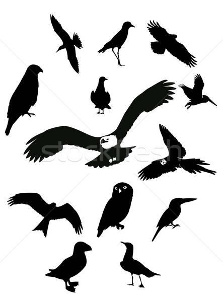 Black birds Stock photo © Amplion