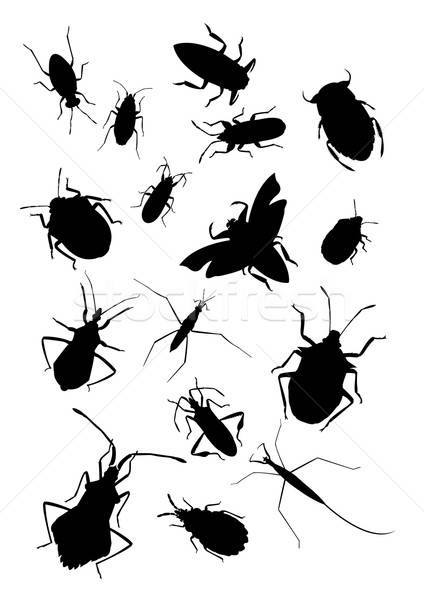 Ensemble bugs vecteur image silhouettes ordinateur Photo stock © Amplion