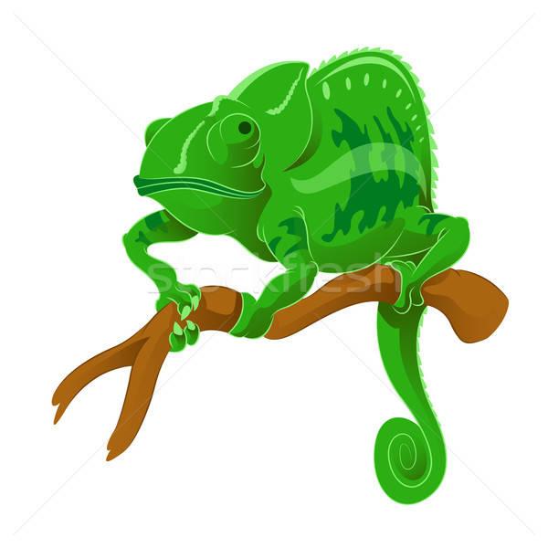 Chameleon wektora obraz zielone oddziału komputera Zdjęcia stock © Amplion
