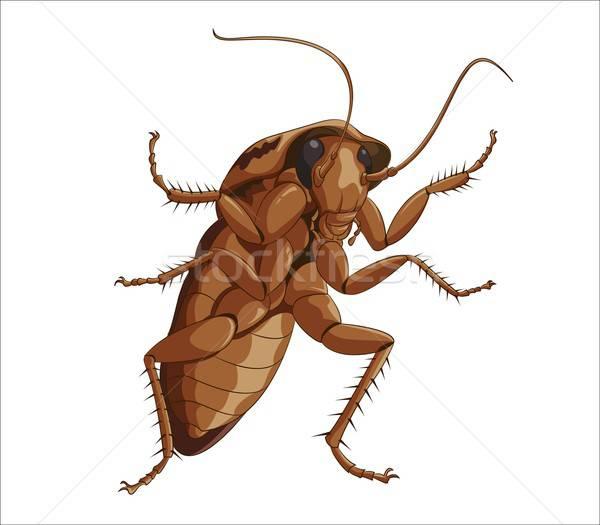 Grande cucaracha cuerpo pelo arte rojo Foto stock © Amplion