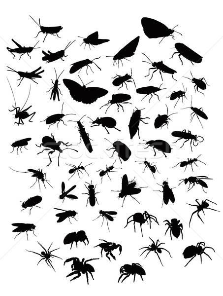 コレクション 昆虫 デザイン グループ シルエット ストックフォト © Amplion