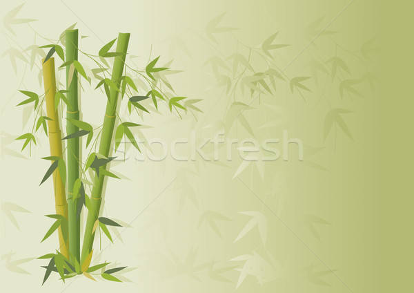Bamboo and branches Stock photo © anaklea