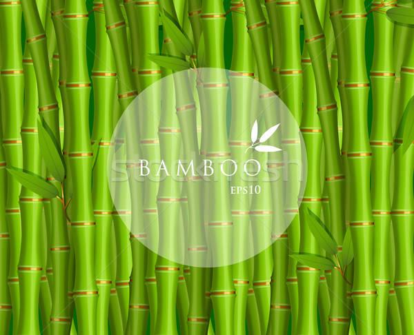 Zielone bambusa drzewo streszczenie krajobraz liści Zdjęcia stock © anastasiya_popov