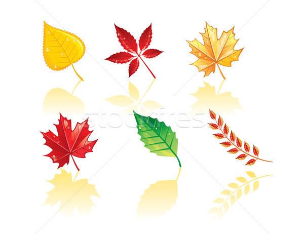 Stock photo: Autumn leafs back