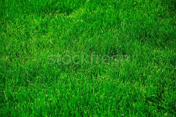 Yeşil ot yaz güzel duvar kağıdı doku soyut Stok fotoğraf © anbuch