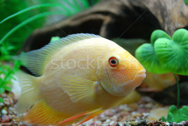 тропические рыбы красивой глубокий морем рыбы природы Сток-фото © anbuch