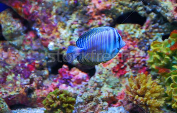 Peixe tropical colorido profundo mar água peixe Foto stock © anbuch