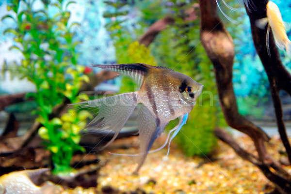 Bella pesce piccolo profondità mare acqua Foto d'archivio © anbuch