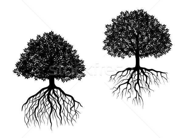 Isolated trees with roots Stock photo © anbuch